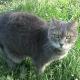 Marcel : le chat du campus.