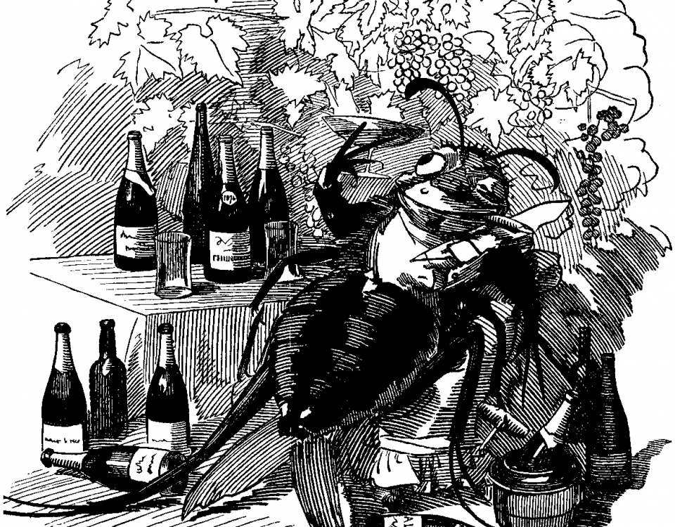 A cartoon from Punch from 1890: The phylloxera, a true gourmet, finds out the best vineyards and attaches itself to the best wines.