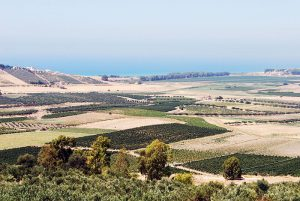 Vineyards and olive groves stretch to the Mediterranean along the Belice Valley in the heat of August. Menfi, Sicilia by Thomas, via Flickr. CC BY-SA 2.0