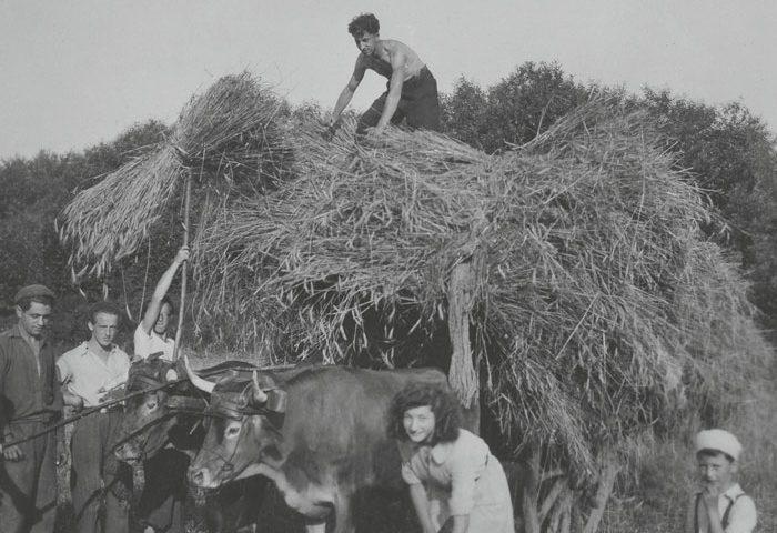 La survie des juifs en France (1940-1944)
