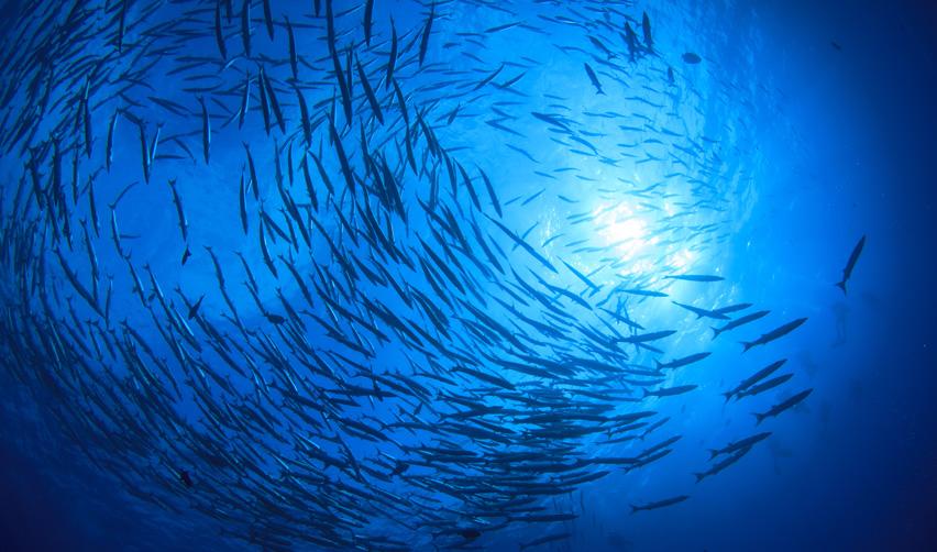 Banc de poissons dans la mer