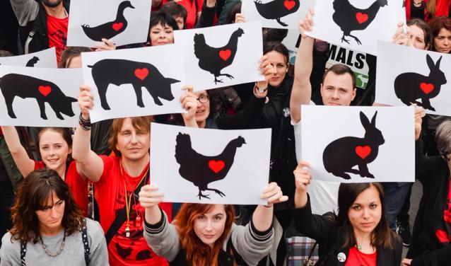 Que peut faire le droit pour les animaux ?