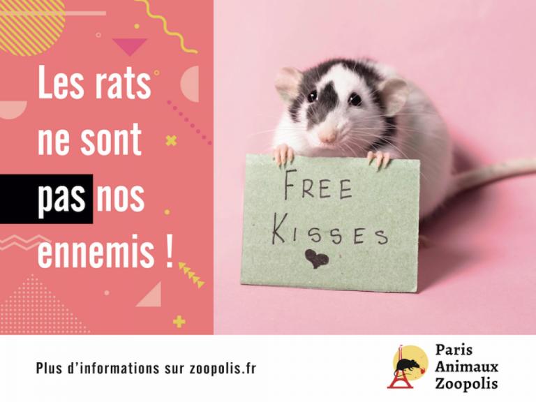 Rats à Paris