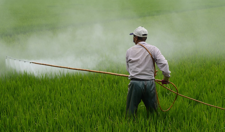 Man spraying pesticides on rice fields (Avignon, France)